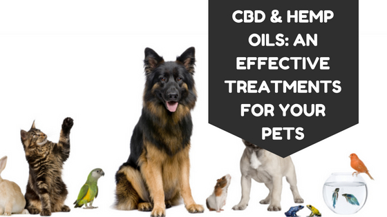 CBD And Hemp Oils: An Effective Treatments For Your Pets