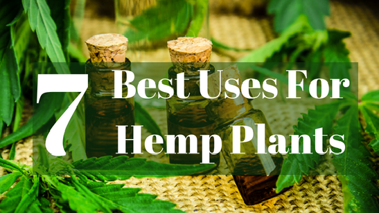 Benefits of Hemp Plants