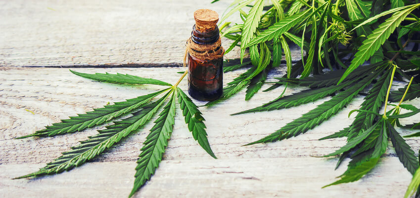 Effects of Pure CBD Oil on Metabolism