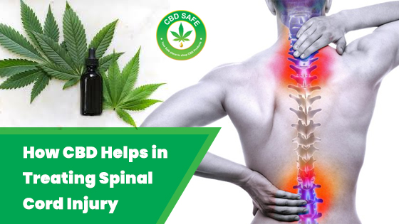 How CBD Helps in Treating Spinal Cord Injury