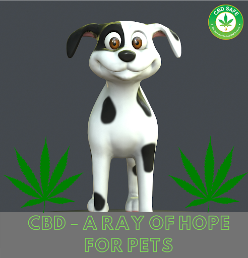 CBD – A Ray of Hope for Pets