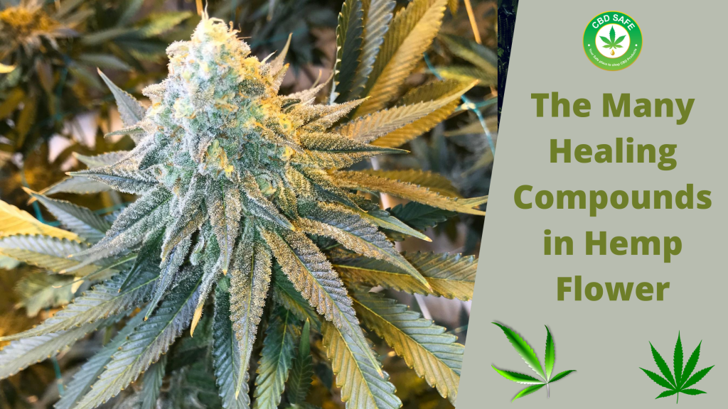 The Many Healing Compounds in Hemp Flower