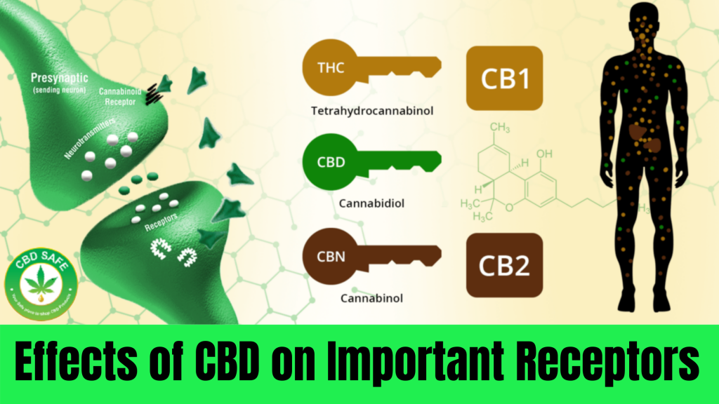 Effects of CBD on Important Receptors